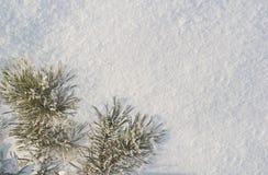 雪结构树的部分 免版税库存图片