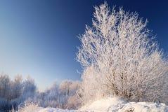 雪结构树 库存照片