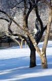雪结构树 免版税库存照片