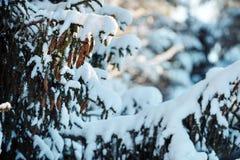 雪美好的风景包括的冷杉木早午餐 库存图片