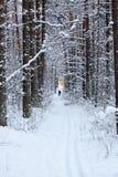 滑雪者在冬天森林里 图库摄影
