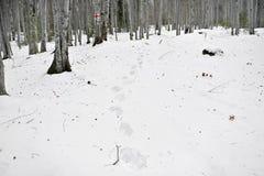 雪脚印在森林 图库摄影