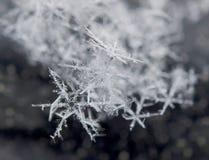 雪花在12月 免版税库存照片