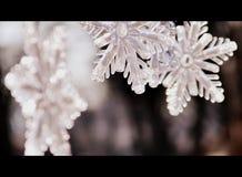 雪花;关闭圣诞节装饰 库存图片