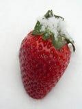 雪草莓 免版税库存图片
