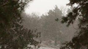 雪落在慢动作的,打旋和漂移反对云杉和杉树背景的剥落与积雪 影视素材