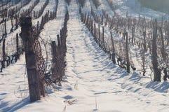 雪葡萄园 免版税图库摄影