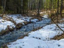 雪融解小河在森林里 免版税库存图片