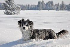 雪行程 库存照片