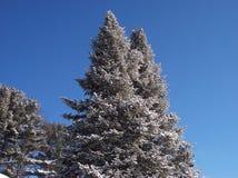 雪被打翻的结构树。 库存照片