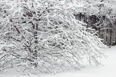 雪被装载的树 免版税库存照片