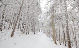 雪被装载的足迹 免版税库存图片