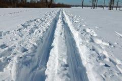 滑雪足迹在一个冷淡的晴朗的下午的一个森林里 免版税图库摄影