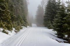 滑雪足迹在森林里。 免版税库存照片