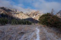雪足迹通过与霜草的冻结的早晨领域在阿尔泰山的杉木中 库存图片