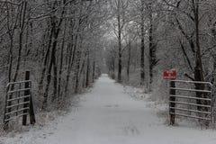 雪足迹 库存图片