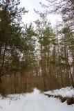 雪路在冬天 免版税库存图片