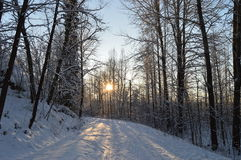 雪路在森林里 免版税库存照片