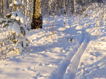 滑雪轨道在冬天森林里 免版税库存照片
