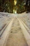滑雪轨道在森林里 库存图片