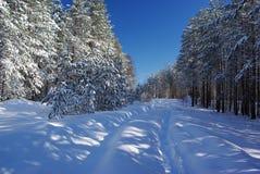 雪道在森林里 图库摄影