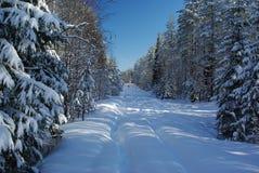 雪道在森林里 免版税库存图片