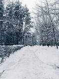 雪道在森林 库存图片