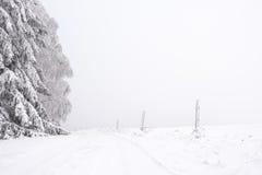 雪道标示用横跨平原的树 库存照片