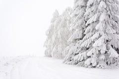 雪道标示用横跨平原的树 库存图片