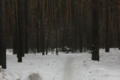 雪道路在冬天森林30547里 免版税库存照片