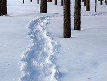 雪道路在杉木森林里 库存照片