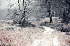 雪道路在飞雪期间的冬天森林 库存图片