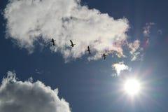 雪雁在飞行中在蓝天 免版税库存照片