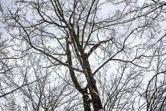 雪风景在冬天 图库摄影