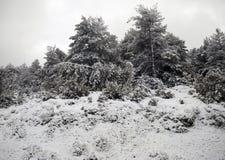 雪风景在冬天 免版税库存图片
