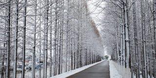 雪风景 库存照片