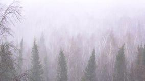 雪风暴在森林森林里 股票视频