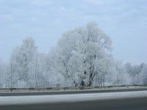 雪风暴 免版税图库摄影