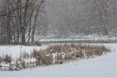 雪风暴的池塘 免版税图库摄影