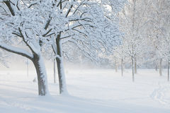 雪风 库存照片