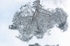 雪飞雪在雪发电器创造的森林里 免版税库存图片