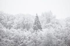 雪飞雪的白色田园诗冬天森林 免版税库存图片