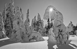 雪鬼魂- Harghita madaras冬天横向  免版税图库摄影