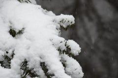 雪,冬天,下雪 免版税库存图片