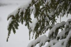 雪,冬天,下雪 库存照片