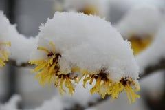 雪,冬天,下雪 免版税库存照片