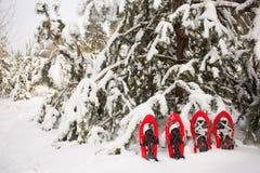 雪靴在森林里 库存图片