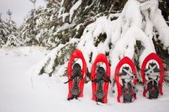 雪靴在森林里 库存照片