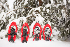 雪靴在森林里 免版税库存照片