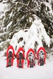 雪靴在森林里 免版税库存图片